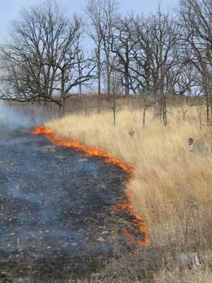 Oak Savannas Characteristics Restoration And Long Term